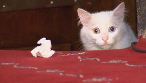 İstanbulda Ayasofyanın kedisi Gliye Ankaradan arkadaş geldi