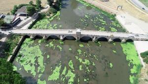 Tunca Nehrinde yosun adacıkları oluştu Bölge halkı tedirgin