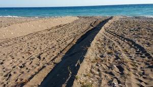 Antalyada sahilde kaplumbağa yuvalarının iş makinesiyle dağıtılmasına 442 bin lira ceza