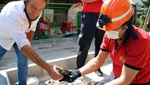 Boruya sıkışan kaplumbağayı, itfaiye kurtardı