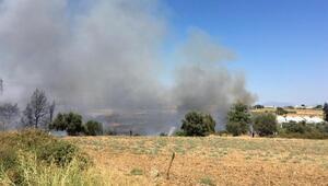 Son dakika... Antalyada seralara yakın otluk alanda yangın