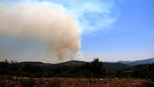Suriye sınırında orman yangını Dumanlar Türkiyeden görülüyor
