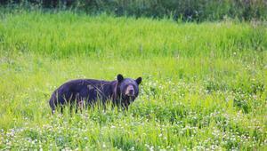 Ormanlar ve vahşi hayvanlar yok edilirse daha ölümcül hastalıklar çıkacak
