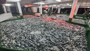 Çanakkalede yeni sezonun ilk gecesi 25 ton sardalya avlandı