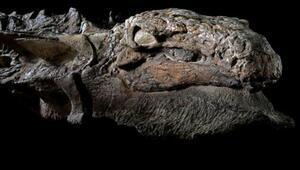 İngilterede bulunan dinozor fosilinin esrarı çözüldü