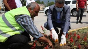 Tokatta mevsimlik çiçek üretimi başladı
