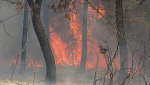 Hatayda orman yangını: 3 hektar alan zarar gördü