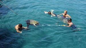 Yaralı yeşil deniz kaplumbağası, 3 saatte kurtarıldı