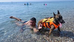 Türkiyenin ilk cankurtaran köpeği Fox