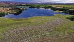 Ağrı Dağı Milli Parkında oluşan yosunlaşma havadan görüntülendi