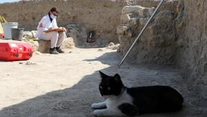 Kedi Mokali, Maydos Antik Kenti ve kazı ekibinin maskotu oldu