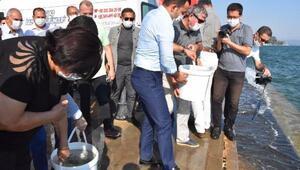 Köyceğiz Gölüne 100 bin yavru sazan bırakıldı