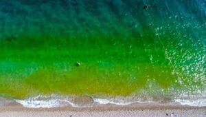 Fitoplanktonlar denizi yeşile döndürdü, tatilciler korktu