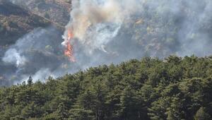 Soğuksu Milli Parkında 30 dönüm orman yandı