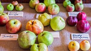 Mitolojide de yeri var günümüz sofrasında da... Elmanın hiç bilmediğiniz özellikleri