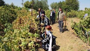 Diyarbakırda, bağ bozumundaki hasat asker ve sağlık çalışanları için yapıldı