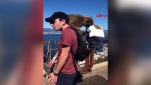 İngilterede genç çift hırsız maymunların gazabına uğradı