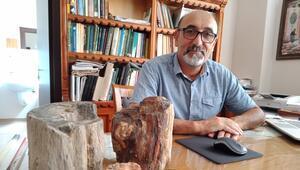 Ankara'nın fosil ağaçları