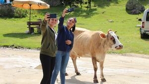 Rizede Galer Düzü'nde doğal ortam... Ziyaretçiler hayvanlarla fotoğraf çektiriyor