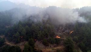 Antakyada orman yangını söndürülmeye çalışılıyor