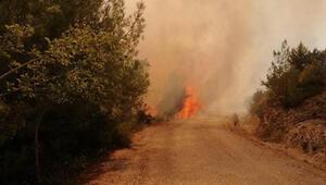 Son dakika... Adanada orman yangını