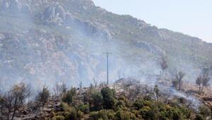 Serikte orman yangını; 5 hektar alan kül oldu