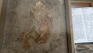 Konya Arkeoloji Müzesi Nerede Konya Arkeoloji Müzesi Tarihçesi, Eserleri, Giriş Ücreti Ve Ziyaret Saatleri (2020)