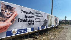 Sivas Belediyesinin hayvan hakları duyarlılığı