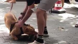İstanbulda feci görüntüler Köpeği vurun