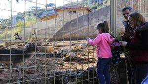 Antalya Hayvanat Bahçesi Nerede Antalya Hayvanat Bahçesi Hayvanları, Giriş Ücreti, Çalışma Saatleri Ve İletişim Bilgileri (2020)