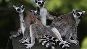 Boğaziçi Hayvanat Bahçesi Nerede Boğaziçi Hayvanat Bahçesi Hayvanları, Giriş Ücreti, Çalışma Saatleri Ve İletişim Bilgileri (2020)