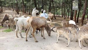 Çekmeköy Hayvanat Bahçesi Nerede Çekmeköy Hayvanat Bahçesi Hayvanları, Giriş Ücreti, Çalışma Saatleri Ve İletişim Bilgileri (2020)
