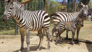 Faruk Yalçın Darıca Hayvanat Bahçesi Nerede Darıca Hayvanat Bahçesi Hayvanları, Giriş Ücreti, Çalışma Saatleri Ve İletişim Bilgileri (2020)
