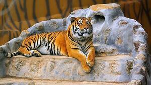 Gaziantep Hayvanat Bahçesi Nerede Gaziantep Hayvanat Bahçesi Hayvanları, Giriş Ücreti, Çalışma Saatleri Ve İletişim Bilgileri (2020)