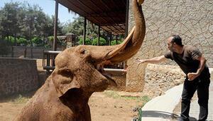 İstanbul Hayvanat Bahçesi Nerede İstanbul Hayvanat Bahçesi Hayvanları, Giriş Ücreti, Çalışma Saatleri Ve İletişim Bilgileri (2020)