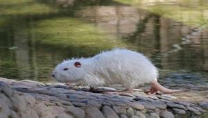 Polonezköy Hayvanat Bahçesi Nerede Polonezköy Hayvanat Bahçesi Hayvanları, Giriş Ücreti, Çalışma Saatleri Ve İletişim Bilgileri (2020)