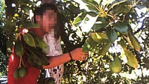 Avokado hırsızları fotokapanla yakalandı; şüpheli çift tutuklandı