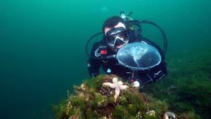 Marmarada görülen ay denizanası için uyarı: Değdiğinde yakar
