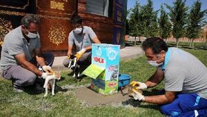 Aksaray Belediyesinden sokak hayvanları için yem takviyesi