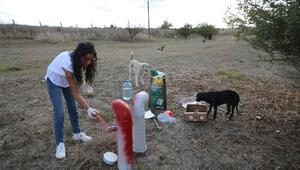 THY kabin memuru, Uçan Patiler ile sokak hayvanlarını pandemide de yalnız bırakmadı