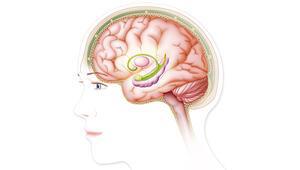 Beyin Pillerinin Yerini Musk'ın Çipi mi Alacak