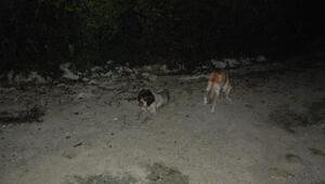 Uyuşturucu iğneyle bayıltılan sokak köpekleri yola terk edildi