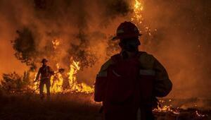 Trump: ABDde süren yangınların sebebi küresel ısınma değil