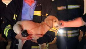 Yangında dumanların arasında kalan yavru köpek kurtarıldı
