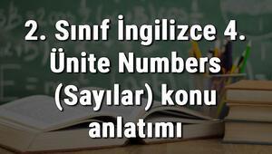 2. Sınıf İngilizce 4. Ünite Numbers (Sayılar) konu anlatımı