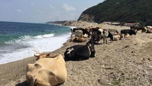 Çilingoz Plajı Nerede Ve Nasıl Gidilir Çilingoz Plajı Özellikleri, Kamp İle Konaklama Detayları Ve Giriş Ücreti (2020)