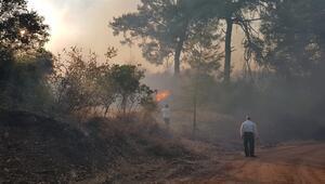 Antalyada çıkan orman yangınları söndürüldü