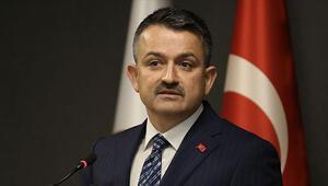 Bakan Pakdemirliden Antalyadaki yangınla ilgili açıklama