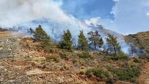 Son dakika... Dalamanda orman yangını