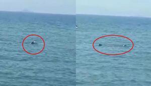 Akdeniz foku avlanırken böyle görüntülendi